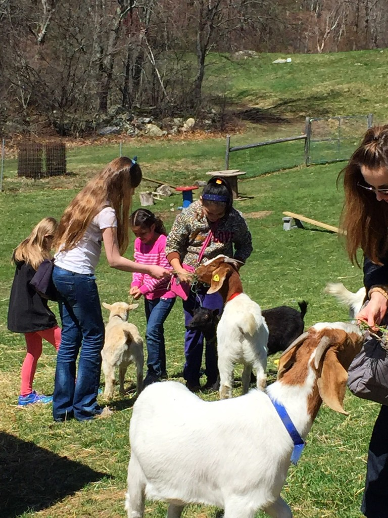 KITK participants feeding the goats